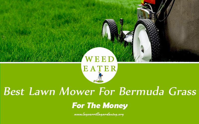 Best Lawn Mower for Bermuda Grass Reviews 2021