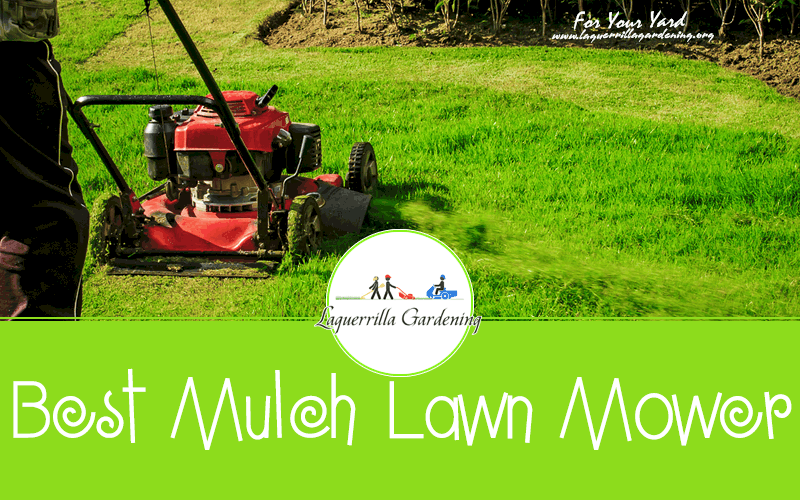 Best Mulch Lawn Mower Reviews 2020