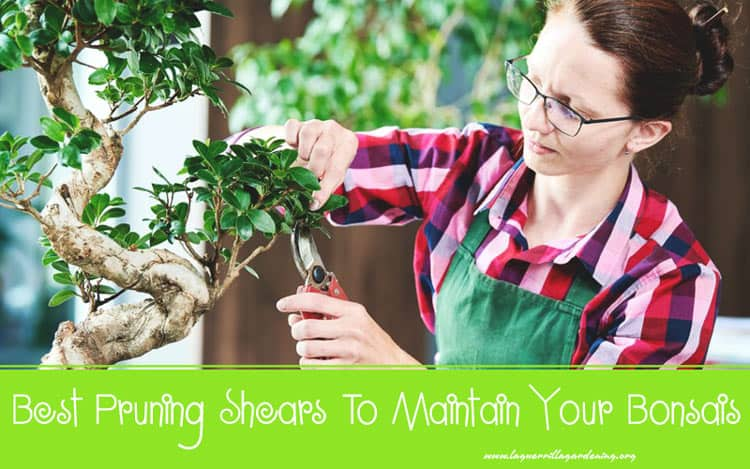 Best Pruning Shears To Maintain Your Bonsais